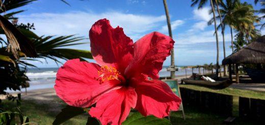 praia do itacarezinho - o que fazer em itacaré